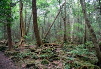 """Japonya'da """"İntihar Ormanı"""" Olarak Da Bilinen Aokigahara Ormanının Ürküten Hikayesi"""