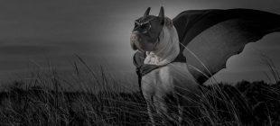 Paddington, the shar pei canine is so lovable it harms