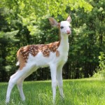 This Gorgeous Baby Deer Was Abandoned By His Mother For A Reason That Is Unbelievable