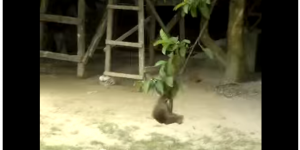 This Video Of Cat And Monkey Playing Together Is Going Viral Over Internet