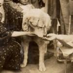Hachiko: Gözyaşlarımızı Sele Dönüştüren Bir Köpeğin Hikayesi'nden 16 Duygusal Replik