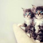 Bir Kedi İle Aynı Evi Paylaşmanız İçin 13 Kafanıza Yatacak Neden