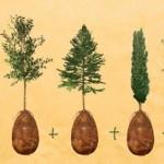 Öldükten Sonra Bir Ağaç Olarak Dirilme Projesi