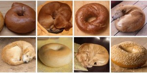 The Internet Is Going Nuts Over The Puppies Who Look Like Your Favourite Food