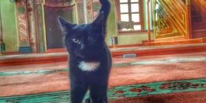 Camisinin Kapılarını Sokak Kedilerine Açan Dünyalar Güzeli İmam Mustafa Efe Hoca
