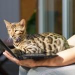 Aşk Acısını Atlatmanın En İyi Yolunun Bir Kedi Olduğunun 12 Kanıtı