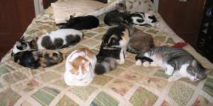 Evde Kedi Beslemeyen İnsanların Asla Anlayamayacağı 12 Patili Görsel