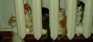Trafoya Gireni Girmeyeni İle Tüm Zamanların En Eğlendiren 40 Kedi Caps'i