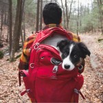 14 Pictures To Prove Camping With Dogs Is The Best Thing Ever