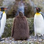 İnsanların Hayvanlardan Öğrenebileceği 18 Hayat Dersi