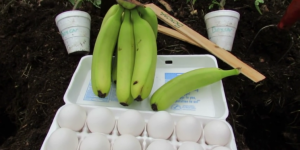 He Put Banana And Egg In A Pit. We Thought It Was A Joke But Then This Happened…
