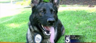What This 11-Year-Old Girl Does After The Death Of Police Dog Will Amaze You