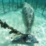 Divers Find Animals Trapped In Cages Underwater, Shocking!