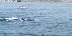 This Giant Whale Gave Birth To Its Baby In Front Of Tourists In California